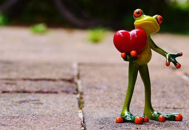 7 tips to love your frog